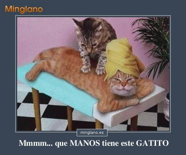 Imagenes Graciosas De Gatos Con Frases66 - IMAGENES