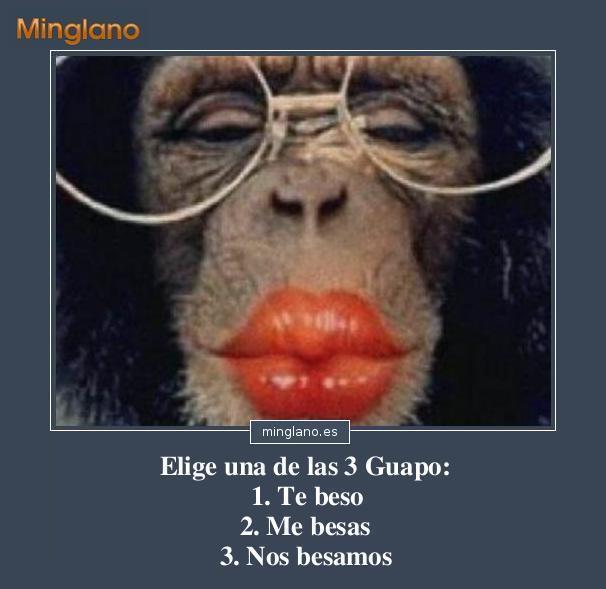 Frases Con Imágenes De Monos