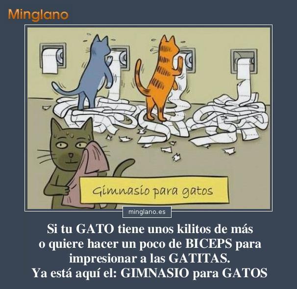 FRASES con IMÁGENES DIVERTIDAS de GATOS