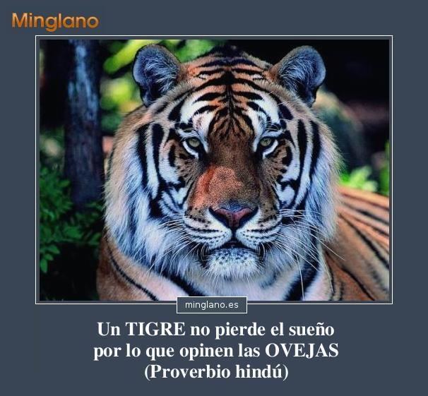 Proverbio Hindú Sobre Tigres