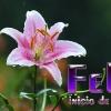 FRASES BONITAS de FELIZ INICIO de SEMANA