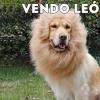 FRASES DIVERTIDAS de LEONES y PERROS
