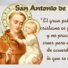 FRASES para SAN ANTONIO de PADUA