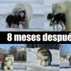IMÁGNES DIVERTIDAS de ANIMALES con FRASES